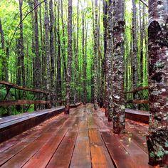 Reserva Biológica Huilo Huilo in Neltume, Los Ríos