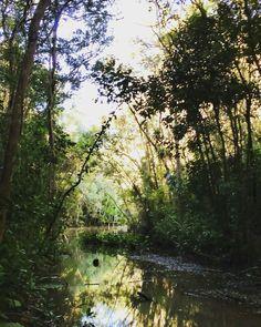 poder das florestas na produção de água! As matas ciliares e um dos serviços ecossistêmicos produzidos por elas 🌳🏞 #mataatlantica #maisverde #mataciliar #rio #agua #preserve #water #paz #peace #trabalho #work #naturephotography #natureza #verde #rainforest #biology