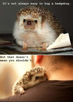 awwwww.  the best way to learn a life lesson is when it's illustrated by an adorable hedgehog.