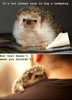 . i miss my hedgehog