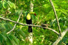 Belize Animals | Conservation Project: Programme for Belize | World Land Trust