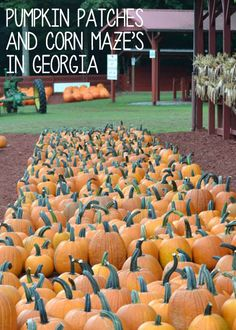 Pumpkin Patches and Corn Mazes in Georgia