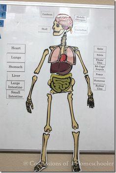 printable human anatomy puzzle - guarantee we'll be doing this!