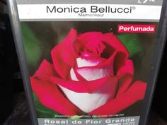 rosal de flor roja y blanca perfumada. flor grande con aroma intenso. Agralia del principado Plantar, Shrubs, Garden Centre, Big Flowers, Shades Of Red, Rose Trees