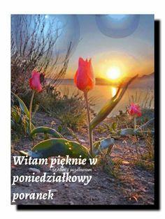 Motto, Good Morning, Painting, Life, Portuguese, Asia, Dreams, Polish Sayings, Good Morning Funny
