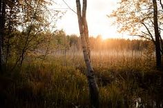 Most of you might have seen Finnish scenery during winter time but summer sets the stage for a different kind of beauty Summer Set, Summer Is Coming, Summer Pictures, Might Have, Winter Time, Nature Photos, Finland, Scenery, Around The Worlds