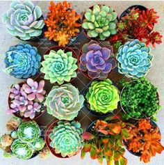 Are you still killing your low-maintenance house plants? Succulents, cacti, and orchids are supposedly low-key, but we often forget to care for them. Here's how to care for those tricky house plants. For more DIY and design ideas, go to Domino. Succulent Seeds, Succulent Care, Cacti And Succulents, Planting Succulents, Garden Plants, Planting Flowers, Plants Indoor, Cactus Seeds, Sun Plants