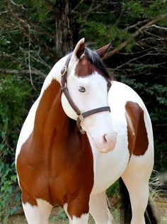 What a Beautiful Horse