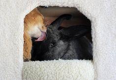 Billedserie om kaninen Melba og katten Kara, der begge måtte vente længe på at få sig et nyt hjem efter at være havnet på internat, men som fandt en kærlig familie og hinanden.   Læs mere om det skønne venskab: http://lovemeow.com/2012/11/rescue-cat-finds-everlasting-friendship-with-rescue-rabbit/  #huskaniner www.kaninhaandbogen.dk