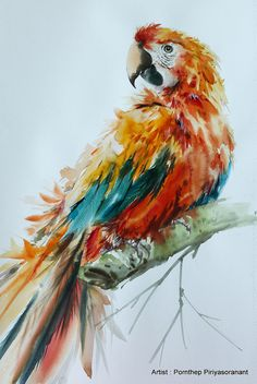 Beautiful Macaw Bird  Painting Bird art Art print size 8X10
