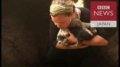 崩落した「イスラム国」トンネルから子犬10匹救出 モスル奪還作戦続くなか - ライブドアニュース http://news.livedoor.com/article/detail/12202463/