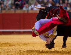 Spanish matador Antonio Nazare is hit by a bull in The Maestranza bullring in Seville, Spain, on April (Photo by Marcelo del Pozo/Reuters) Fantasy News, Nfl Sunday, Double Dare, Canada, Picture Story, Recent Events, Pictures Of The Week, All Things Purple, Amazing Pics