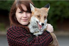 <b>While some say that foxes are destructive, smelly and hard to train, these animal lovers see them as the perfect pet</b>. And who can blame them?