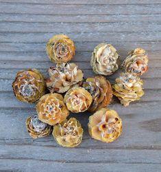 Virág formájú trópusi mini toboz