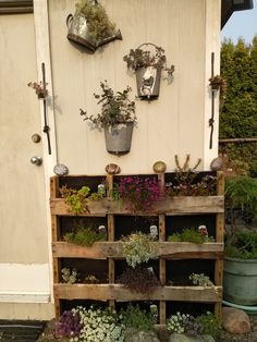 Saw this on the internet and thought it was a great way to re-purpose some pallets into a flower wall. Quite pleased with the outcome. It will be interesting to see how they make it through the winter. Thinking I will put some clear plastic over it. #recycle #repurpose #flowerwall Make It Through, Flower Wall, Pallets, No Time For Me, Ladder Decor, Repurposed, Things To Think About, Recycling, Internet