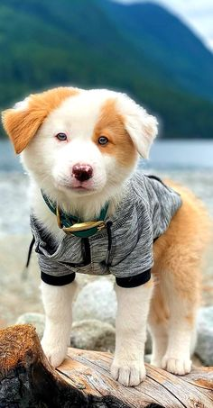 Kittens And Puppies, Cute Dogs And Puppies, I Love Dogs, Doggies, Animals And Pets, Baby Animals, Funny Animals, Cute Animals, Dog Wallpaper
