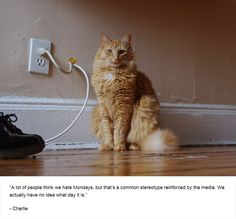 25+ Cats' Deepest Secrets Revealed On Felines Of New York