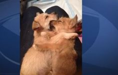 Litter of Puppies, Dumped And Left To Die In Cape Coral! Demand Justice! | PetitionHub.org