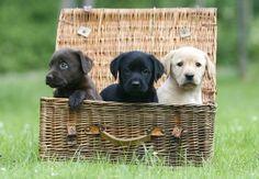 Foto 1 - Hundewelpen: Diese Tiere will man einfach streicheln!, jetzt auf bildderfrau.de #hundewelpen  http://www.bildderfrau.de/familie-leben/album809874/hundewelpen-diese-tiere-will-man-einfach-streicheln-0.html