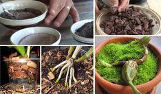 33 Melhores Truques de Como Fazer Subtrato Caseiro da Maneira Certa Para Plantas