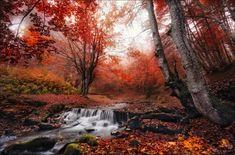 Red Forest Of Carpathians Mountains, Ukraine Photography By: Vlad Sokolovsky
