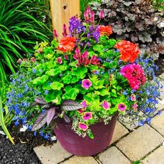 For a gorgeous, ever-blooming combo, try planting your urn with red pelargonium, magenta celosia, blue lobelia and Persian shield. | Photo: Courtesy of Joyce Hannaford | thisoldhouse.com
