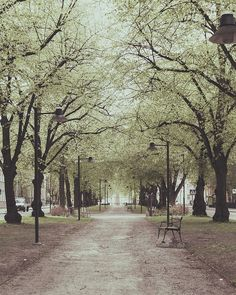 spring in the park, linköping, sweden | travel photography