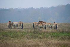 Im Wildpark Schorfheide Chorin könnt ihr Tiere und Natur hautnah erleben! Hier streifen unter anderem Wölfe, Luchse und Wisente durch ihre großzügigen Gehege. Doch nicht nur die großen, beeindruckenden Waldbewohner sind hier zu Hause, denn auf euch warten natürlich auch die zutraulichen (und immer hungrigen) Ziegen, Pferde, Schweine und Kaninchen auf eine ausgiebige Streicheleinheit.  Wer also noch ein bisschen trockenes Brot zu Hause hat mitnehmen zum füttern.
