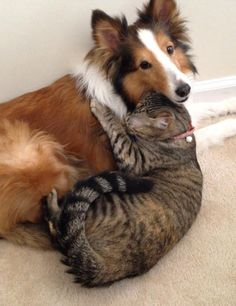 cats-and-dogs-getting-along-291__605.jpg (605×786)