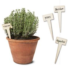 Parsley, sage, rosemary and thyme. Know your herbs and avoid spicy mix-ups at dinner. Wooden plant signs.