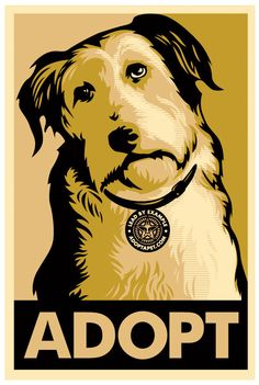 Adopt or Foster a dog - please don't forget your local shelter has lots of animals in need of love and a home