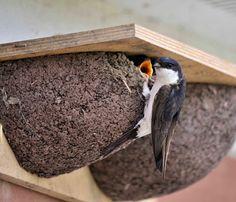 50 Best Nest Boxes Images Bird House Feeder Birdhouses Nest Box