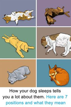 Here's what it means when your dog sleeps in these positions. This is what ie means when your dog sleeps in certain positions!  #dogs #pets #animals
