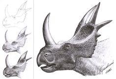 Rubeosaurus ovatus process and finished drawing by Sergey Krasovskiy
