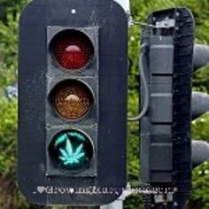legalizeallherb:    Marijuana traffic light