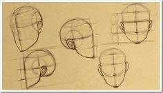 Картинки по запросу пропорции лица