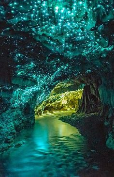 The Waitomo Glowworm Caves in New Zealand are glowing in the dark because of a glowworm species. Ever seen something like this? // Die Waimoto Glühwürmchenhöhlen in Neuseeland leuchten auf Grund der besonderen Würmchen im Dunkeln. Unbeschreiblich! #LifeLessOrdinary
