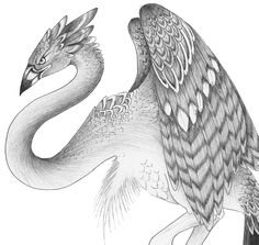 Pics For > Mythical Bird Creatures