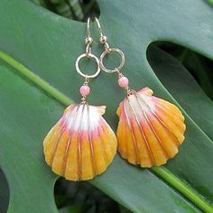 Sunrise Shell Earrings, Gold, Rare Hawaiian Shell, Orange, Pink Coral, Hawaii Beach Jewelry, Summer Fashion on Etsy, $120.00