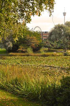 Renströmsparken - historia och grönska i stadens brus