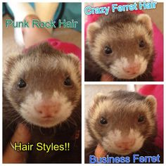I Tried to get our ferrets to sit still,do this and take pics. I failed..