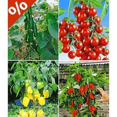Veredelte Snack-Gemüse Kollektion, 4 Pflanzen - BALDUR-Garten GmbH