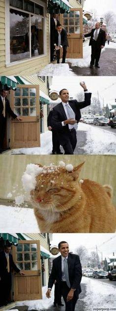 Obama Hates Cats!
