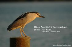 """When I see Spirit in everything, Peace is at hand."" ~ Jonathan Lockwood Huie"
