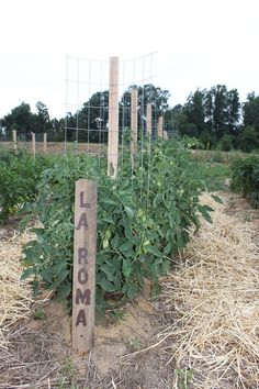 How To Build The Ultimate Tomato Cage For Under 2 The Stake A Cage You may chuckle at the name but Stake A Cage really is the best way to describe th.