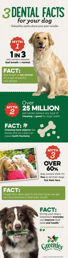 The Greenies Myth Buster - Get Your FREE Greenies Sample Now