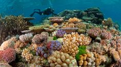 The Great Barrier Reef is the largest living structure on earth.