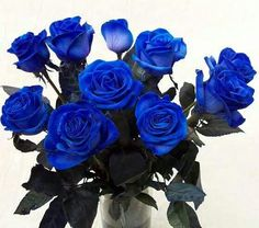 Rosas azuis, arranjo, buquê, decoração.