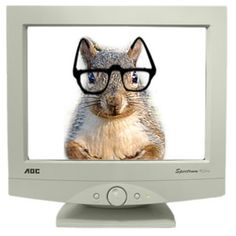 nerds for #squirrels4good