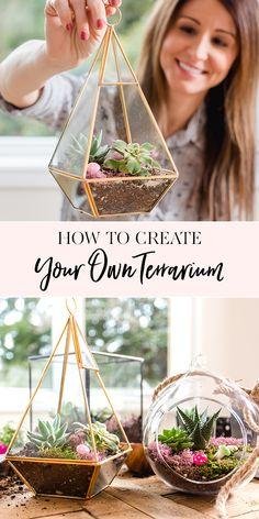 Create Your Own Terrarium with ANKO x Jenny Cookies – succulent garden diy